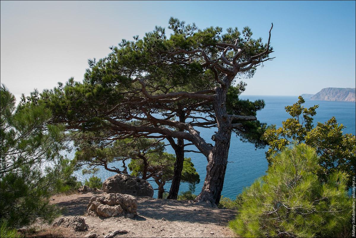 Однонаправленные деревья