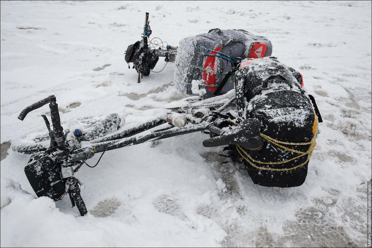Коней заметает снегом