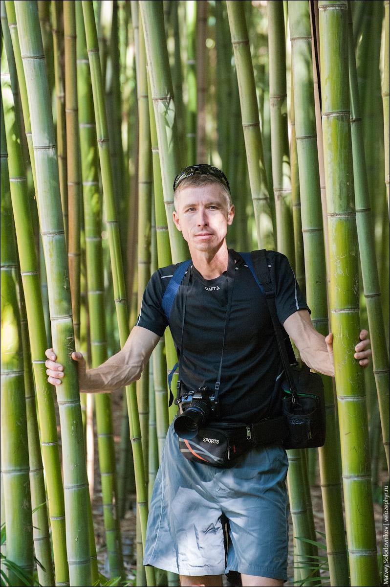 Миша среди бамбука
