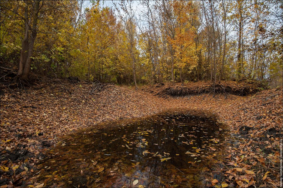 Осенние лужи