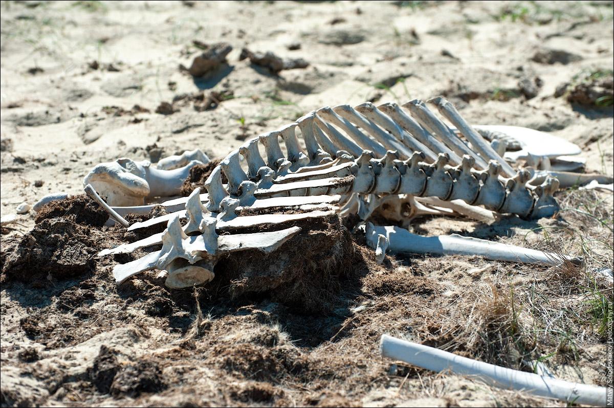 Чей-то скелет