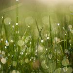 Травинки в росе