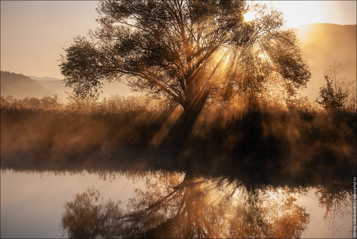Дерево в лучах солнца