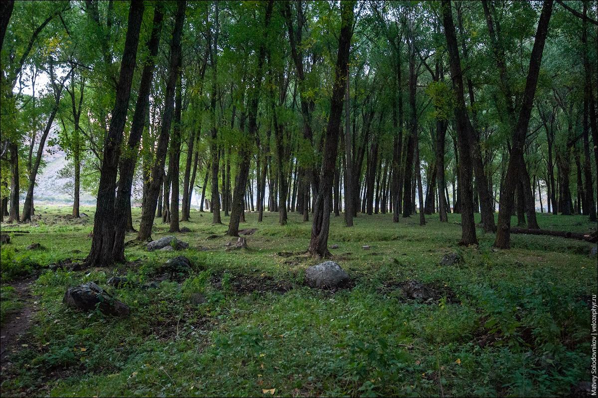В этом лесочке я и заночевал.