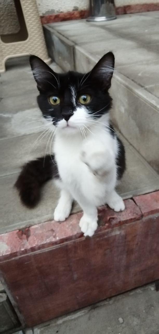 Хостельный кот
